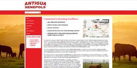 Antigua Senepols
